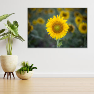 Sehar Crafts Canvas Painting
