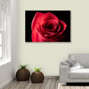 Sehar Crafts Rose Flower Canvas Painting